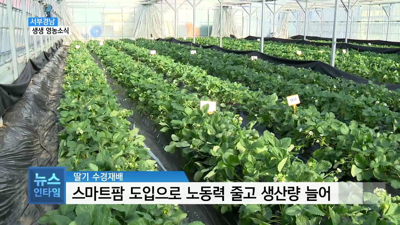 (섹션R) 생생영농소식 - 스마트팜으로 딸기 생산성 증대 사진